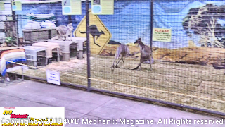 Aussie Kingdom of animals at the 2013 Reno Home & Garden Show