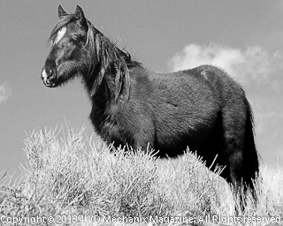 B&W of Growing Up in the Wild Horse Country!