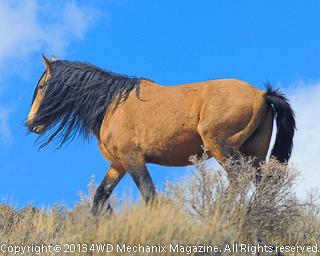 Aging and Wise Stallion